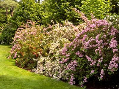Комнатные цветы и растения садовые цветы и их названия