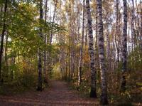 лес18.JPG