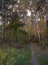лес_16.JPG