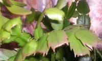 post-15293-1128589968_thumb.jpg