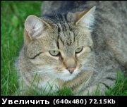 post-16689-1166645497.jpg